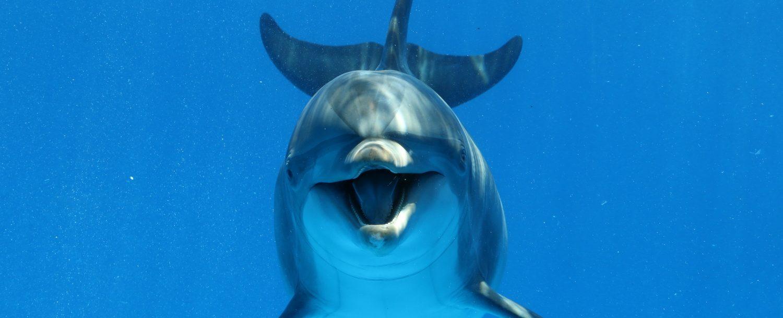 Dolphin Cruises in Destin, FL