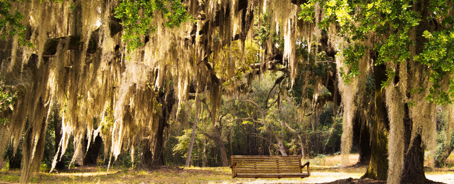 Swinging bench surrounded by hanging moss and live oaks at Eden Gardens State Park